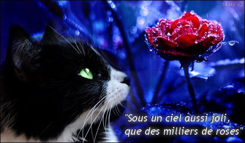 Boule de Soleil - chaton du Clan du Tonnerre 1395364430021522500