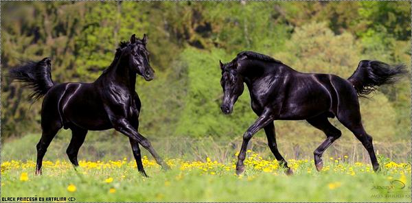 Black Princesä - Nëlarion ♀ 1393971854024060400