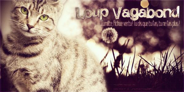 Loup Vagabond