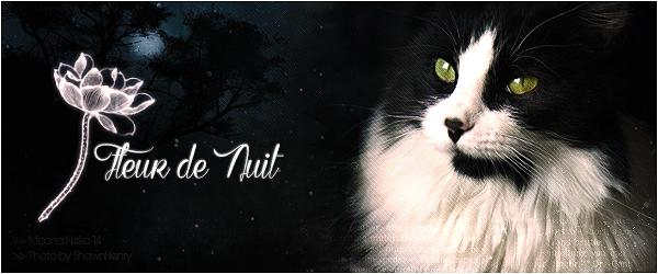 Boule de Soleil - chaton du Clan du Tonnerre 1403131614026539600
