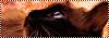 Vie de chats 1271530054089674000