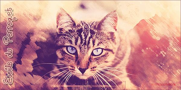 Cat's News - Le Retour ! 1401987796013163900