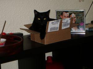 le chat noir :-) - Page 3 1318874967011147300
