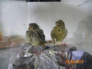 Suite à question sur nos animaux de (bonne) compagnie - Page 4 1277645961058816700
