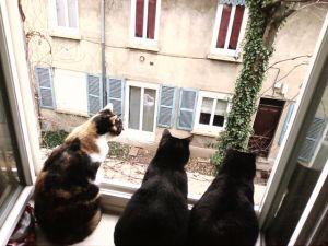 le chat noir :-) - Page 3 1318875138049471600
